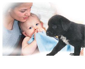 La presentación del nuevo bebé a nuestro perro