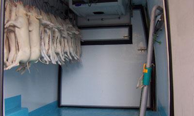 Interior de un transporte de lechones